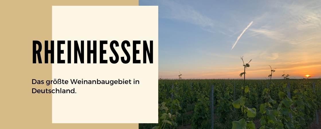Weinanbaugebiet Rheinhessen in Deutschland