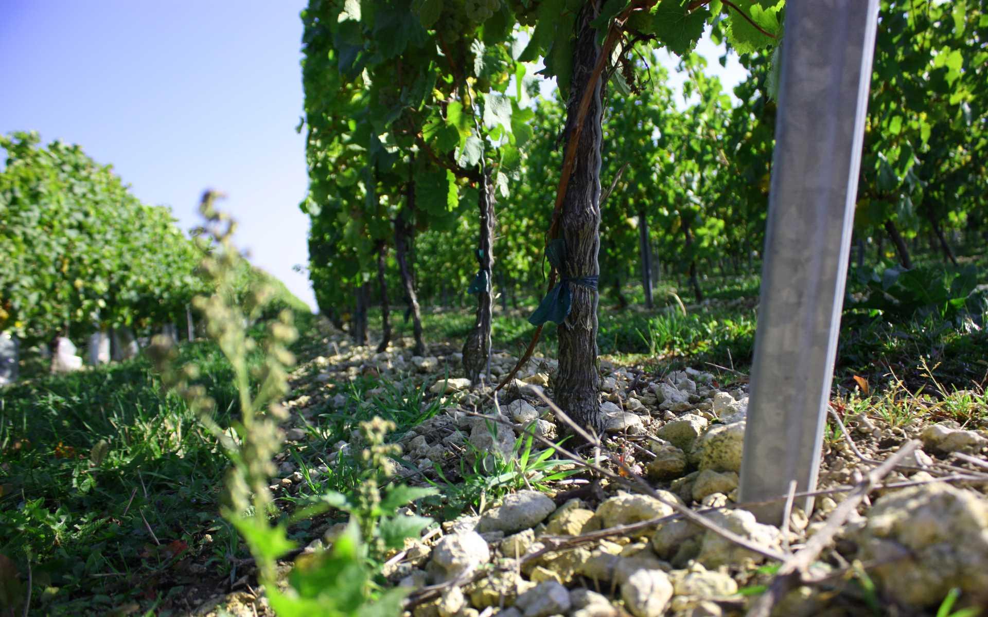 Weingut Thörle Riesling PROBSTEY 2014 Lagenwein